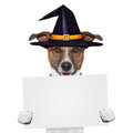 Halloween placeholder banner dog Royalty Free Stock Image