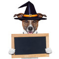 Halloween placeholder banner dog Royalty Free Stock Photo