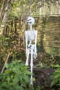 Halloween plastic blow up skeleton hanging off a tree Royalty Free Stock Images