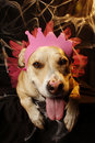 Halloween Princess Pupp Stock Image