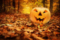 Halloween pumpkin. Autumn forest Royalty Free Stock Photo