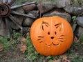 Halloween pumpkin cat on the grass Royalty Free Stock Photos