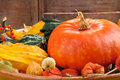 Halloween pumpkin compositon. Stock Photos