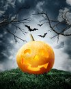 Halloween pumpkin on field. Royalty Free Stock Image