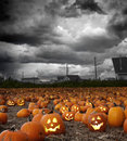 Halloween pumpkin field Royalty Free Stock Photo