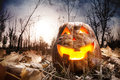 Halloween pumpkin in the forest glowing inside dark autumn Stock Image
