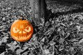 Halloween pumpkin on the ground with leaves and tree trunk Royalty Free Stock Photo