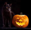 Halloween pumpkin head and black cat Royalty Free Stock Photo