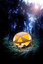 Halloween pumpkin scary in the dark forest at night Royalty Free Stock Image