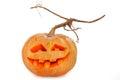 Halloween pumpkin scary jack o lantern Stock Photography