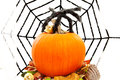 Halloween pumpkin with spiderweb over white background Stock Photo