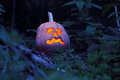 Halloween pumpkin still life with in the dark forest Royalty Free Stock Photos