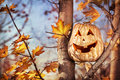 Halloween pumpkin on the tree funny autumn forest Royalty Free Stock Photos