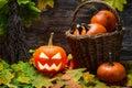 Halloween pumpkin in wicker basket on wooden background Royalty Free Stock Image