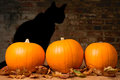 Halloween pumpkins against a brick wall with the shadow of a black witches cat Royalty Free Stock Photo