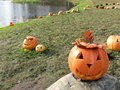Halloween pumpkins on the grass Stock Photo
