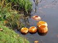 Halloween pumpkins swimming in lake Royalty Free Stock Photos