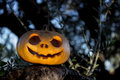 Halloween scary pumpkin in the gren tree brushwood