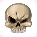 Halloween scary skull isolated on a white background Royalty Free Stock Photography