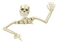 Halloween skeleton pointing an illustration of a cartoon mummy down at a sign or scroll and waving Royalty Free Stock Photography