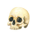 Halloween Skull. Watercolor illustration