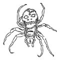 Halloween spider formidable looking black and white Royalty Free Stock Photos
