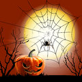 Halloween spider and spiderweb file Stock Photography