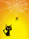 Halloween spider web and black cat background. Royalty Free Stock Images