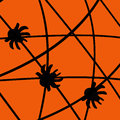 Halloween spiders Stock Photography
