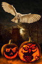Halloween spooky pumpkins owl the night of st october the eve of all saints day is thought to be associated with the celtic Royalty Free Stock Image