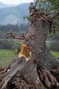 Strom na halloween