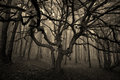 Halloween tree with spread branches in a forest fog Royalty Free Stock Images