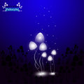 Hallucinogenic mushrooms psilocybe the shining of group Royalty Free Stock Photography