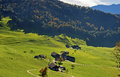 Hamlet on green meadows in a mountainous region switzerland Stock Image