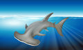 Hammerhead shark illustration of a Royalty Free Stock Photos