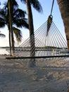 Hammock in Florida Keys Stock Image
