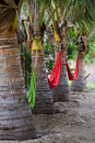 Hammock row Royalty Free Stock Photo