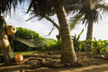 Hammock in a tropical setting Royalty Free Stock Image