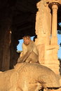 Hampi monkey in hanuman temple karnataka state india Royalty Free Stock Images