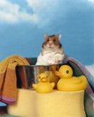Hamster in a bath tub Stock Image