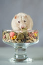Hamster among colored Food for rodents on a gray background Royalty Free Stock Photo