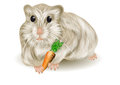 Hamster on a white background eps Royalty Free Stock Photos