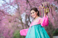 Hanbok the traditional korean dress and beautiful asian girl holding crowd with sakura Stock Image