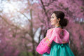 Hanbok the traditional korean dress and beautiful asian girl wi with sakura Stock Photography