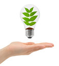 Hand and bulb with plant isolated on white background Stock Photography