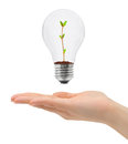 Hand and bulb with plant isolated on white background Royalty Free Stock Images