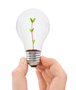 Hand with bulb and plant isolated on white background Stock Photo