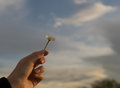 Hand with a camomile on sunny summer day. Royalty Free Stock Photo