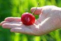 Hand of a child who holds the mature red cherry Royalty Free Stock Photo