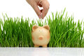 Hand deposit money in piggy bank with grass background Royalty Free Stock Photo